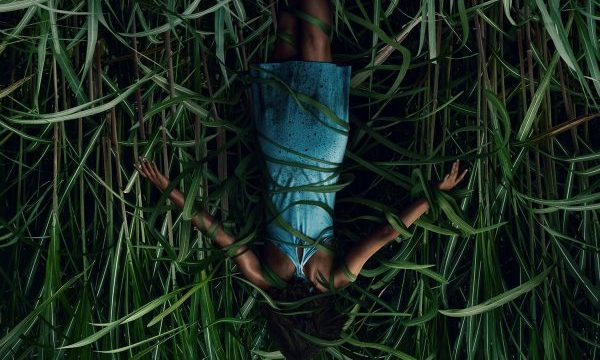 [News] Stephen King's IN THE TALL GRASS Comes to Life in Trailer