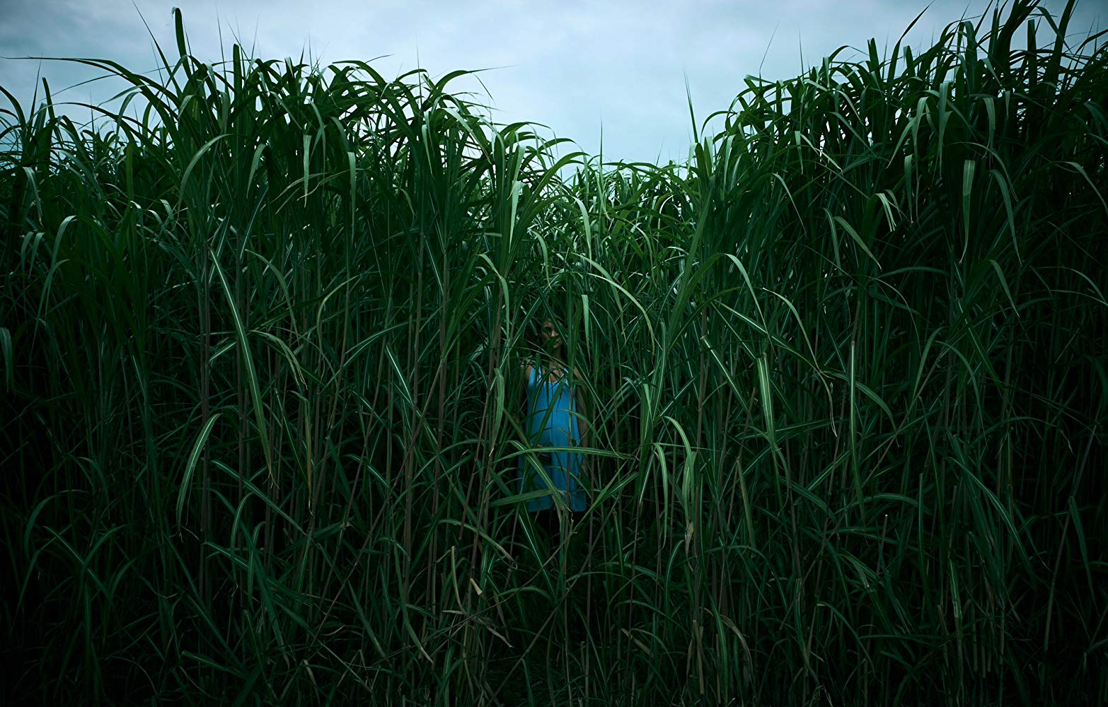 Fantastic Fest Interview: Writer/Director Vincenzo Natali for IN THE TALL GRASS