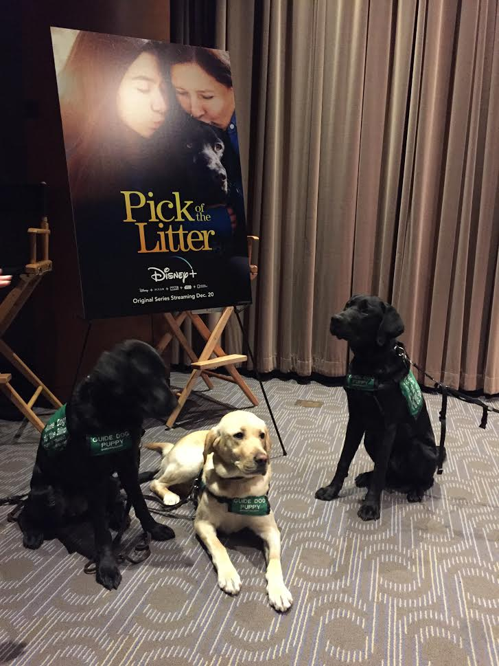 [Article] Bringing PICK OF THE LITTER to Disney+